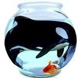 Orca in a bowl