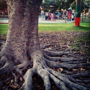 barrio logan roots run deep