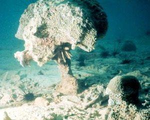 Coral-reef-bioerosion