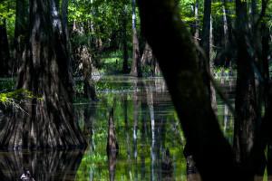 Mississippi_Swamps_2_by_howe2skate