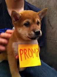 prom puppy