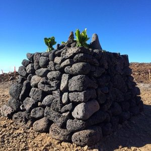 "Protecting Mauna Kea: ""We Are Satisfied With The Stones"""