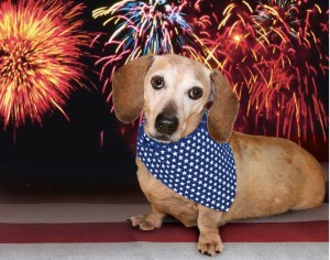 Fun, Fear and Fireworks on the Fourth of July