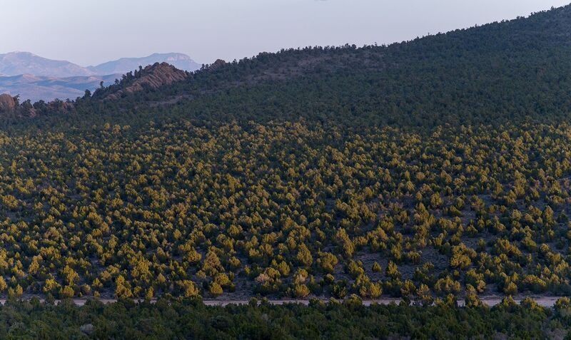 Healthy Pinyon-Juniper forest