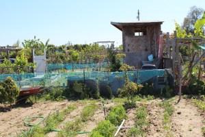 Gardening Builds Community in the Tijuana River Valley