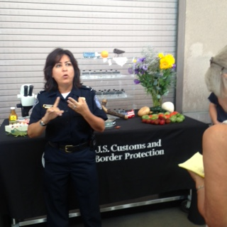 U.S. Customs demonstration of agricultural products inspected and pests/insects found.