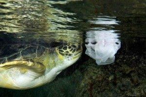 sea-turtle_bag-300x200