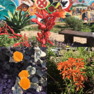 Barrio Logan's Community Garden