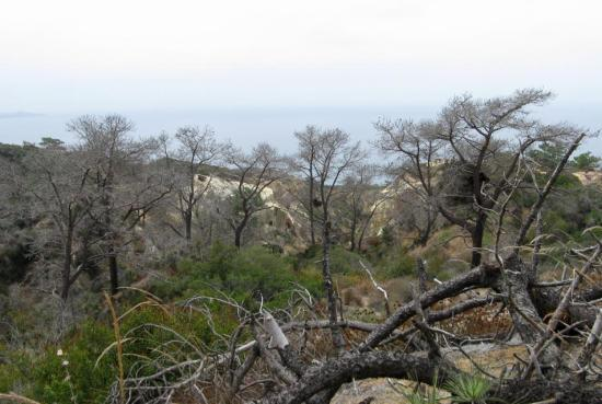 View of dead trees at Torrey Pines Reserve