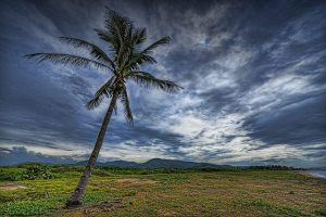 Lone slightly leaning palm tree in grassy plain, cloudy skies, mountain range in distance