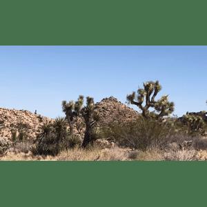 Driving Through Desert   Geo-Poetic Spaces