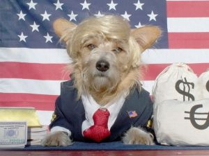 Why Doesn't POTUS Own A Dog?