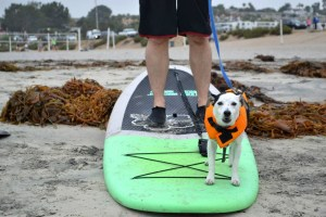 sup paddle boards liberty station, sup pups san diego, sup rental san diego, paddle boarding san diego, sup rentals, stand up paddle san diego, sup rental, paddle boarding in san diego, sup san diego, paddleboard lessons, paddle boarding la jolla, paddleboard san diego, san diego paddle board, paddle board rental san diego, stand up paddle board san diego, paddle board rentals san diego, paddle board san diego, san diego paddle boarding, stand up, paddle boarding san diego, kayak rentals san diego, san diego kayak rentals, san diego paddle board rentals
