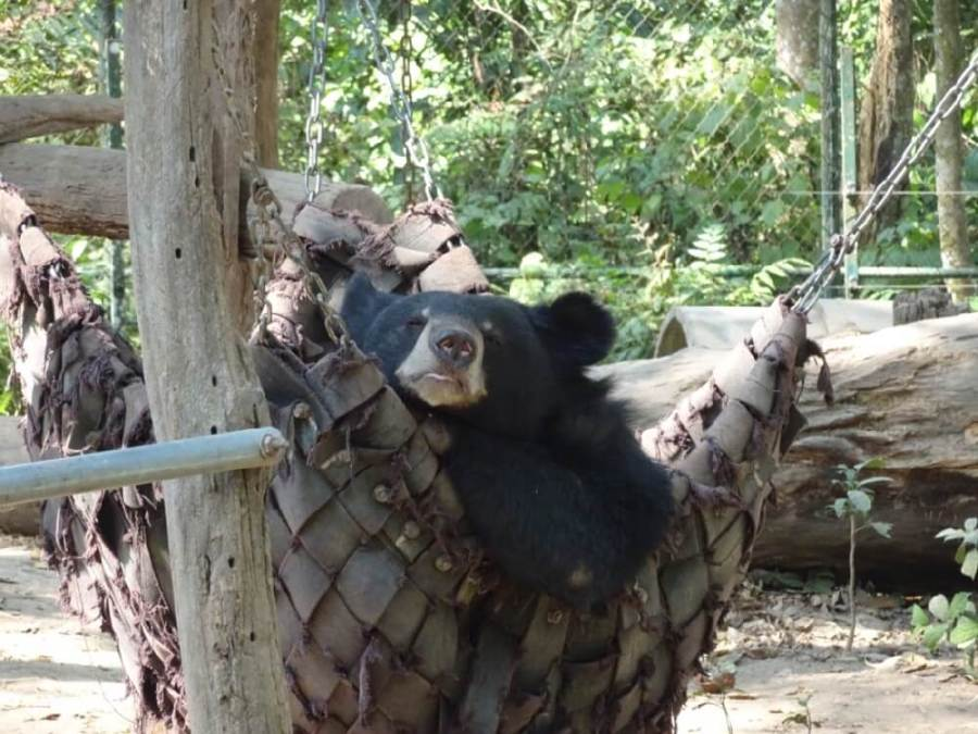 Sun Bear Sanctuary in Kuang Si Falls