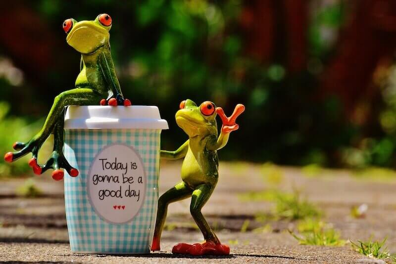 Frogs on coffee cup- expat life