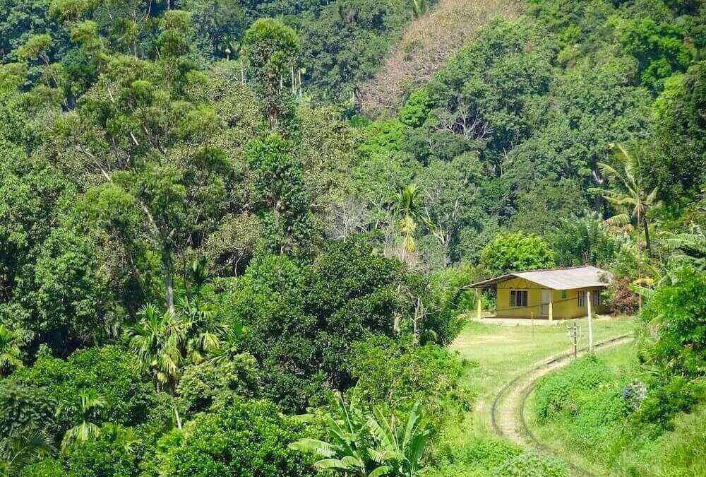 Yellow house hidden in lush Sri Lanka landscpae