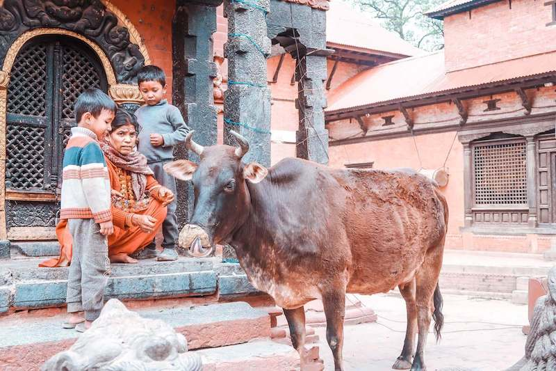 Mom and two boys with bull in Kathmandu, Nepal.
