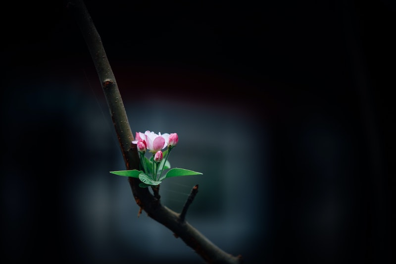 pink flower on a branch