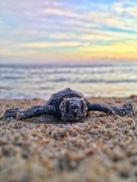 baby turtle close up in sand