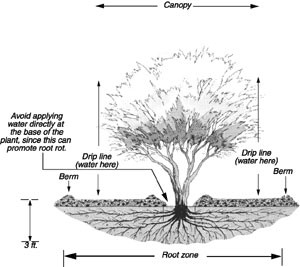 Winter Watering, Pruning, and Landscape Assessment