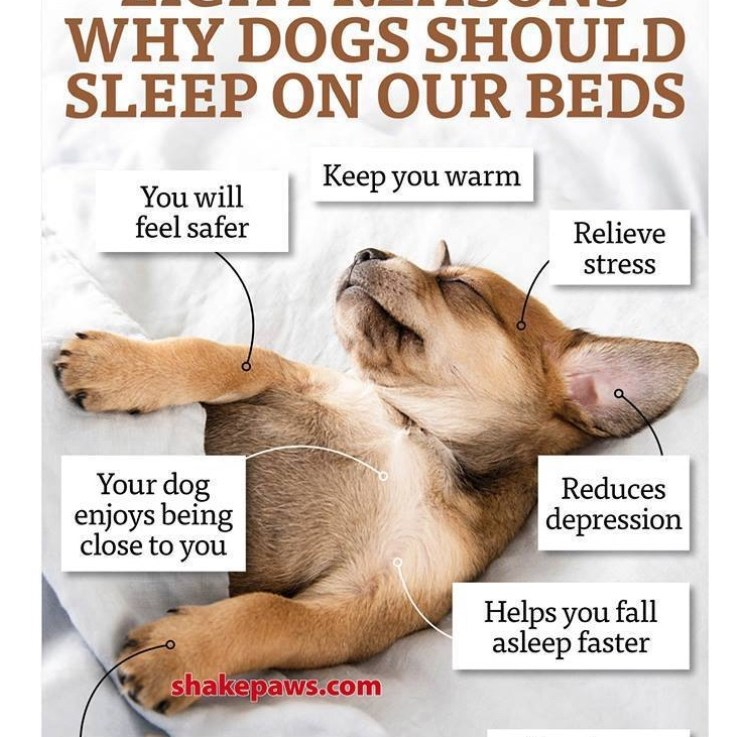 Should dogs sleep with you?