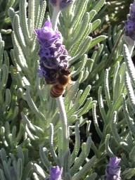 Bee2JPG