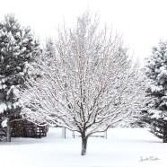 IMG_0162 tree snow square thumb