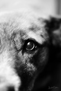 Taters Eye