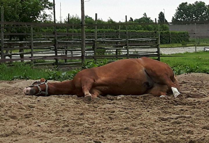 Paard volledig ontspannen