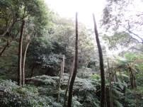 geköpfte Palmen im Yangmingshan Nationalpark