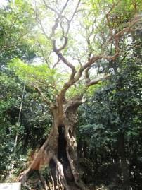 eiiiiinige Jahre alter Baum
