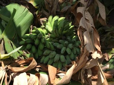 Burying the bananas