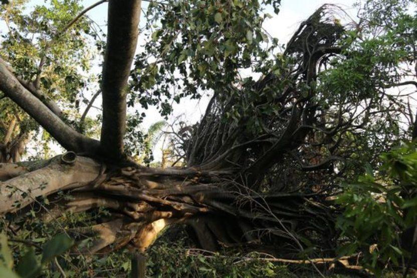 Lessons of Hurricane Irma, No.2
