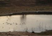 Laguna de aves, Finca La Divina Pastora, La Coposa, Edo. Lara.