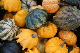 pumpkin-974557_960_720
