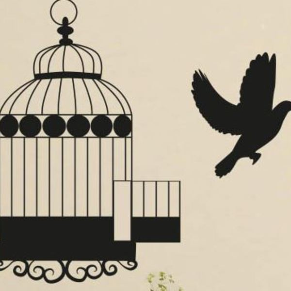 oiseau qui quitte sa cage