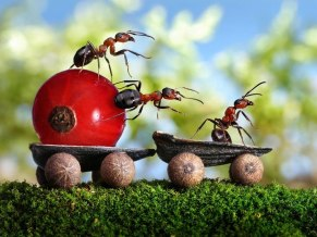 ants-cart_2160871k