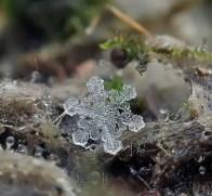 snowflakes-macro-photography-andrew-osokin-21-600x556