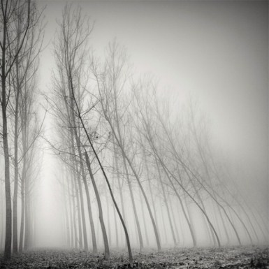 tree-landscapes-by-pierre-pellegrini-1-600x600
