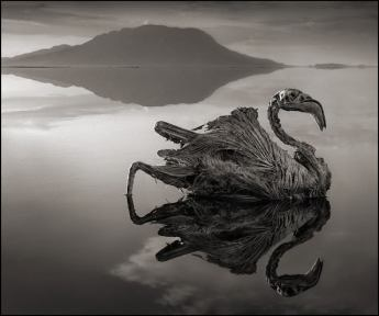 deadly-lake-in-tanzania-calcifies-animals--02Nick+Brandt