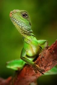 Reptiles_928