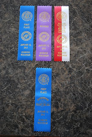 Glory's first AKC show ribbons.
