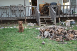 Glory's very own wood pile.