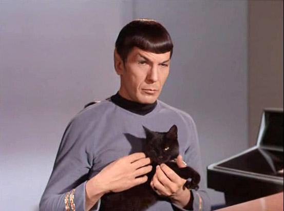 tumblr-static-spock-cat