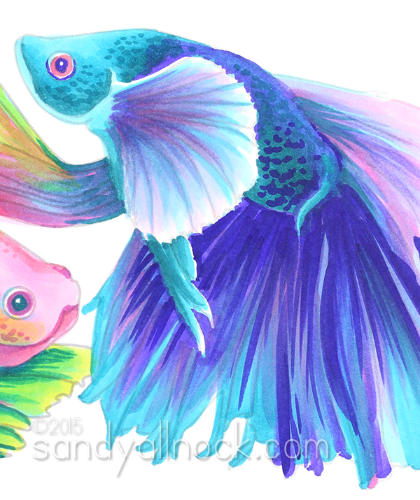 Sandy Allnock - Rainbow Betta Fish3