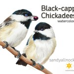 Black Capped Chickadee watercolor
