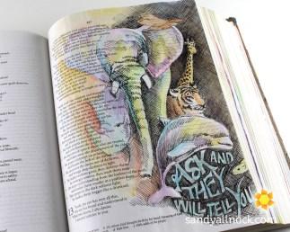 Sandy Allnock Bible Journal Ask the Animals