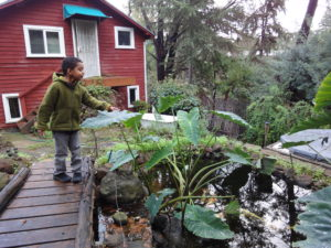 Hamzahat the pond house