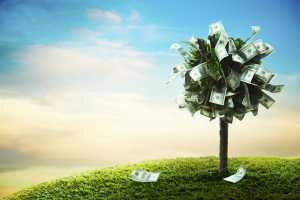 money tree on grass, abundance mindset