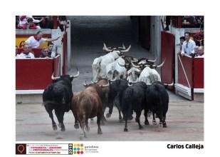 15 Carlos Calleja - Plaza de Toros